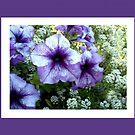 Purple Delight by Ilunia Felczer