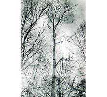 bare trees  #1 Photographic Print