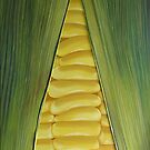 sweetcorn by cathy savels