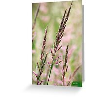 Pink Grass Abstract Greeting Card