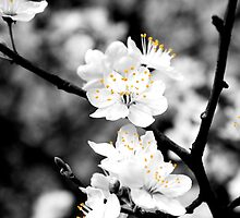 Black and White Flowers by CRGArtDesign