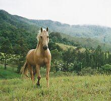 Free Spirit by louisegreen
