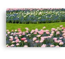 Pink Foxtrot tulips with blue flowers Canvas Print