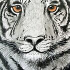 Tiger by Sally Ford