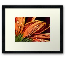 Orange sundrops. Framed Print
