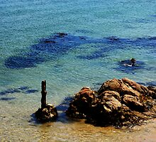 Monterey Stick by lisabrightfire