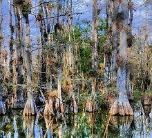 Cypress Garden by Mark Bolen