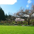 Beautiful pink cherry flowering trees and green grasses under blue sky in The Butchart Gardens at spring time. by naturematters