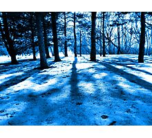 Blue Forest Natural Light and Shadow Photographic Print