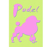 pink poodle - dog Photographic Print