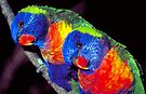 Rainbow lorikeets by Sandro Rossi