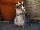Will pose for Sunflower seeds by elasita