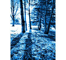 Blue Forest 2 Natural Light and Shadow Photographic Print