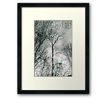 bare trees # 2 Framed Print