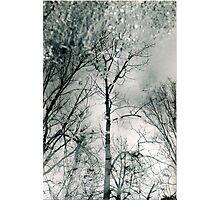 bare trees # 2 Photographic Print