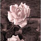 Happy Valentine's Day by Judylee