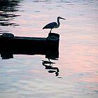 Reflections by LittleBird