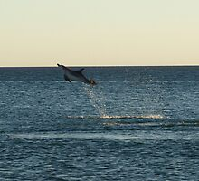 I can fly!!! Dolphin Jump by Richard Cassar