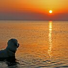 Ditte watches the sunset (Denmark) by Trine