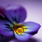 Violets are blue by Angelique Brunas
