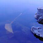 Float Leaf by Jefferson C Hunt