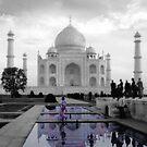 The Taj Suitors by Aimee Stewart