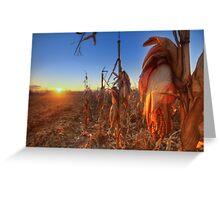 Che ne sai tu di un campo di grano... Greeting Card