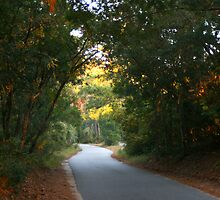 Bald Head Arched Road by Nadine Rippelmeyer