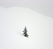 Little Snow Tree by berndt2