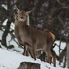 Deer Deer by Rob Outram