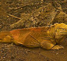 Land Iguana by rayathorseshoes