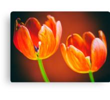 Tulips in Orange Canvas Print