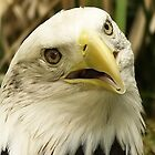 American Eagle by kellimays