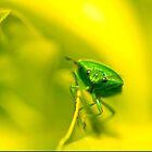 Mr Green by tarnyacox