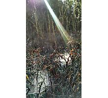 Sun's ray falling onto spider web pools Photographic Print
