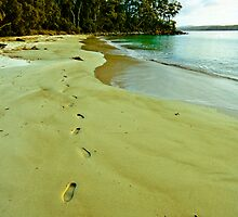 Leave Nothing But Footprints by Rob Brooks