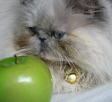 An apple a day keeps the vet away.....Ya think? by Gloria Abbey