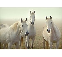 Three Whites Photographic Print