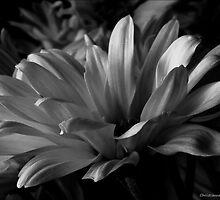 Dark Light by Christianne Gerstner