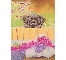 Cute puppy looking over the fence Photographic Print