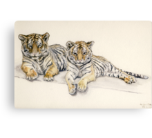 Tigercubs Canvas Print