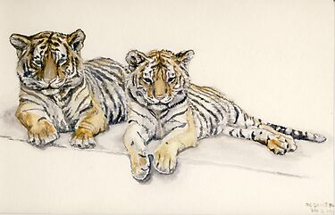 Tigercubs by J-C Saint-Pô