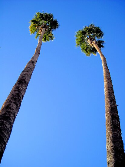 Two Proud Palms by Jo Nijenhuis