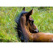 Foaling Time Reprise Photographic Print