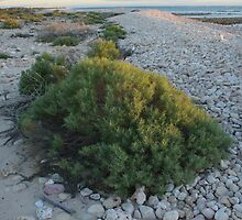 Cape Range Exmouth W.A by liquidtyza