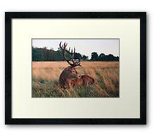 mighty deer Framed Print