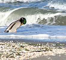 Duck and waves by Stefanie Köppler