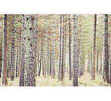 Among the trees Photographic Print