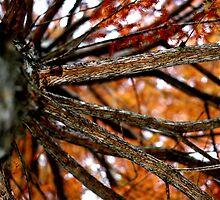 Autumnal Cypress by wovenandspun