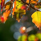Autumn Leaves and Bokeh by Nicole Bechaz